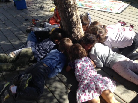 Coconut Tree students carefully observe ants around the olive tree.