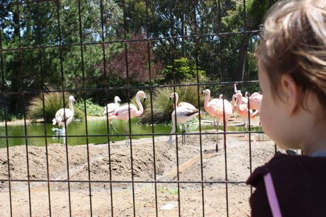 Maile's view of the flamingos...